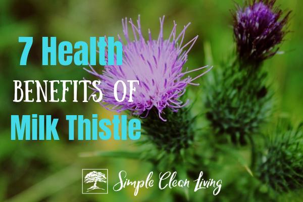 7 Health Benefits of Milk Thistle