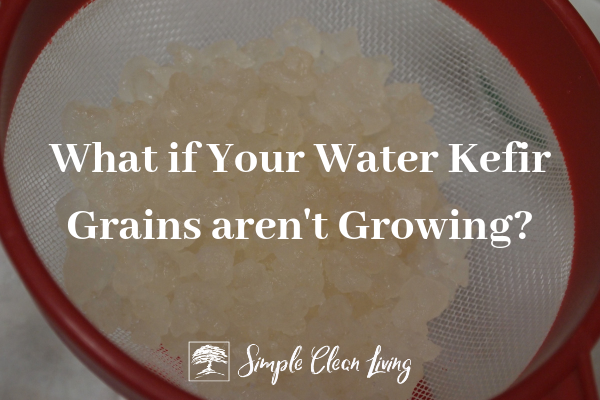 "A picture of water kefir grains in a strainer with the blog post title ""What if Your Water Kefir Grains Aren't Growing"""
