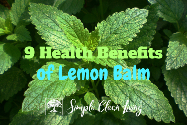 "A picture of a lemon balm plant with the blog post title ""9 Health Benefits of Lemon Balm"""
