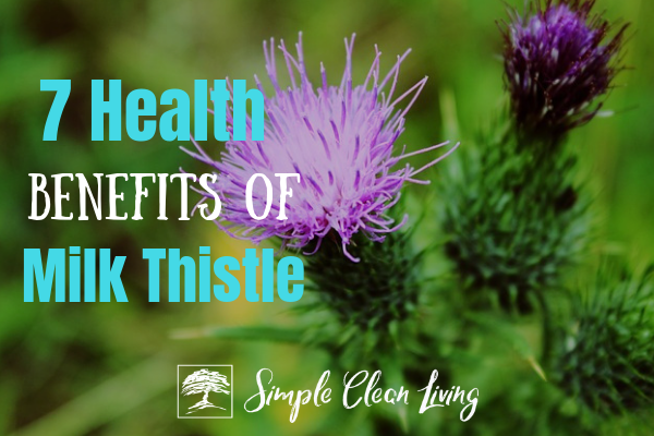 "A picture of a milk thistle plant with the blog post title ""7 Health Benefits of Milk Thistle"""